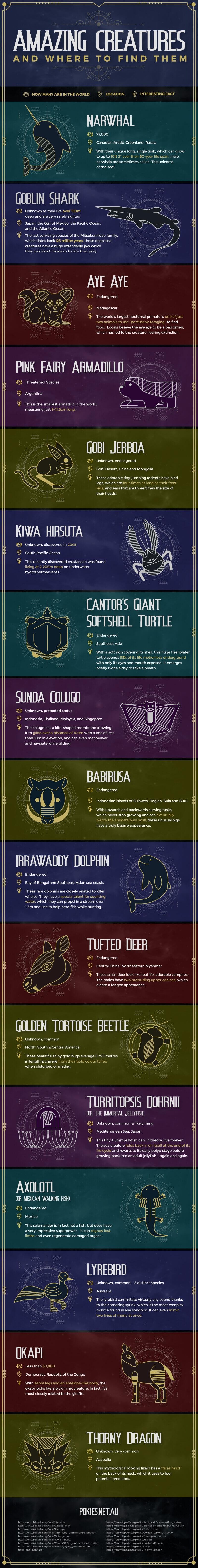 amazing creatures around the world infographic